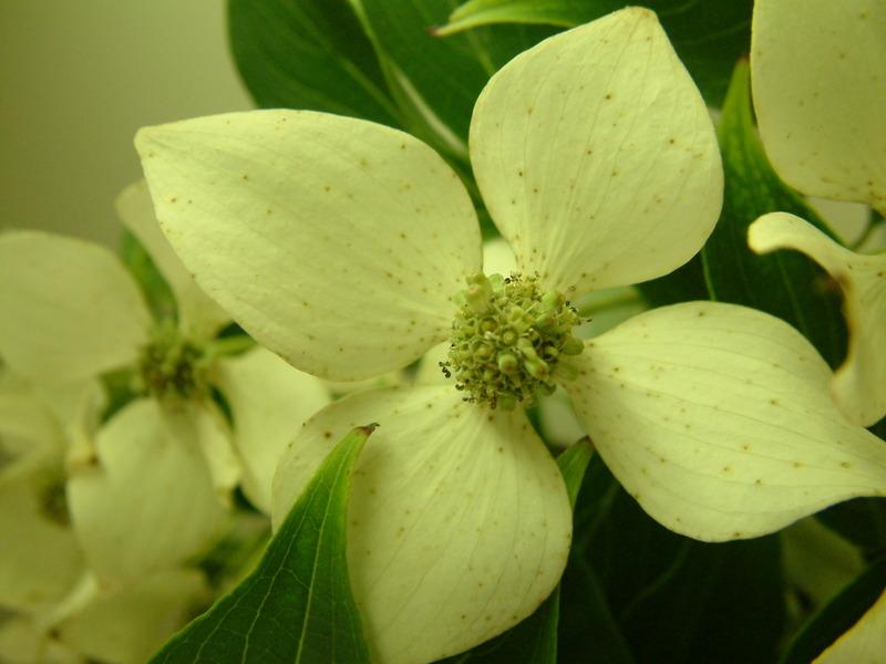 Flowering_bush4